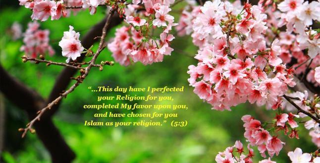 islam-system